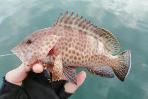 第一回焼津港オモック釣り大会